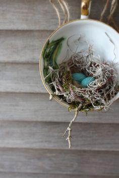 tea cup nest