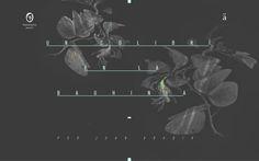 colibrii-03 (1)