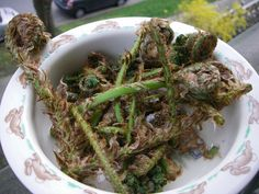 fiddleheads fresh Bushcraft, Green Beans, Paleo, Herbs, Urban, Fresh, Vegetables, Eat, Food