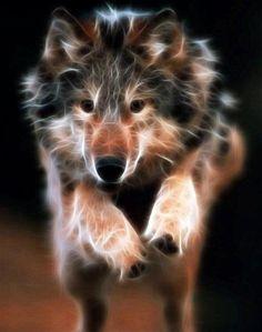 Spirit Animal ~ Wolf