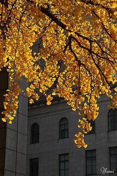 Composition; Contrast. The gold leaves against the background of the building makes this a contrast photo. Contrast is when something is different from another thing.