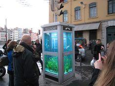 phone booth aquariums by benedetto bufalino + benoit deseille