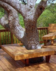 Image result for how to build a bench around a tree trunk Landscaping Around Trees, Landscaping With Rocks, Backyard Landscaping, Landscaping Design, Bench Around Trees, Tree Trunk Table, Tree Bench, Balcony Garden, Lawn And Garden