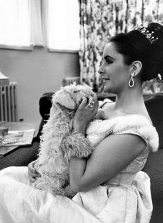 Elizabeth Taylor and a furry friend Elizabeth Taylor, Hollywood Glamour, Classic Hollywood, Old Hollywood, Virginia Woolf, Child Actresses, Actors & Actresses, Classical Hollywood Cinema, Sealyham Terrier