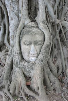 Buddah carved in tree roots; Buddah not considered a god, just unique concept