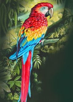 """""""Rainforest Parrot"""" metal poster by Mark Gregory Bird Painting Acrylic, Parrot Painting, Watercolor Art, Parrot Drawing, Colorful Parrots, Colorful Birds, Exotic Birds, Tropical Birds, Animal Posters"""