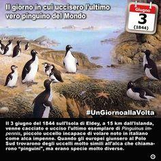 3 giugno 1844: viene ucciso lultimo esemplare di (vero) pinguino del Mondo  Immaginate se i pinguini esistessero anche nellemisfero Nord del pianeta. Come tutti sanno infatti questi splendidi uccelli glaciali vivono solo al Polo Sud. Meno noto però è che fino a un secolo e mezzo fa anche noi da questaltro lato della Terra avevamo la nostra specie di pinguini. Anzi la specie. Già perché il Pinguinus impennis era un piccolo uccello incapace di volere dai colori bianco e nero (molto simile al…