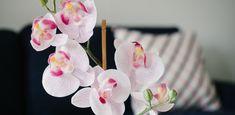 Цветущий дом: главные правила ухода за орхидеей