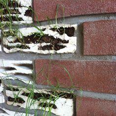 brick biotopes