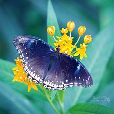.:Blue Wings:. by RHCheng.deviantart.com on @deviantART