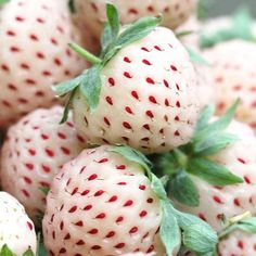 Hula Berries: Pineapple Meet Strawberry! | Florissa | Flower Bulbs, Perennials, Roses, Small Fruits & Vegetables in Canada.