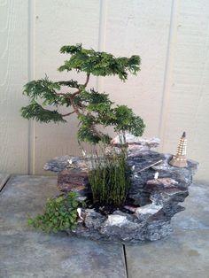 Fantasy Cypress & Miniature Horse Tails in Rock Outdoor Bonsai.  via Etsy.