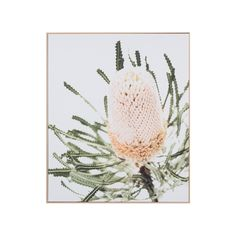 Buy Contemporary Artwork Online or Visit Our Showrooms To Get Inspired With The Latest Homewares From Middle of Nowhere - Banksia Print On Canvas