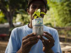 Nachhaltiger Anbau auf Haiti. Haiti, Pictures, First Aid
