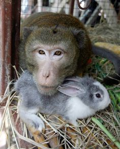Macaque & Rabbit