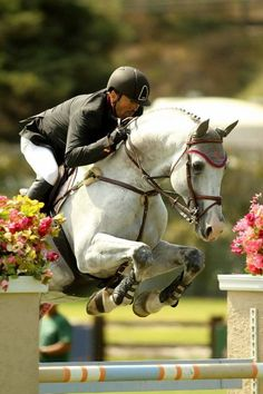 hunter jumper horse equine photo image jump rider equestrian show competition dressage