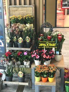 Csendélet, virágos pult Plants, Plant, Planets