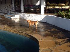 Nyota in piscina