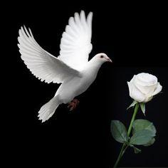 Cerita Cinta Mawar Putih | Catatan JPrasetyo