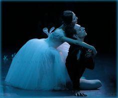 Giselle, Bolshoi Theatre 11.10.15 #sergeipolunin #svetlanazakharova @ E. Vladimirova