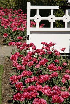 Emmetts Gardens