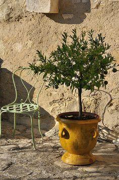 Anduze pots of Provence Garden Urns, Garden Planters, Planter Pots, Potted Garden, Toscana, Potted Olive Tree, Potted Trees, Olive Jar, Pot Jardin