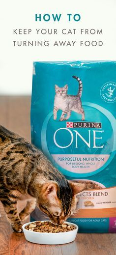 Cats prefer fresh food. If your cat's food is kept in the original packaging, make sure to squeeze the air out of the bag, close tightly, and store in a cool, dry place to ensure freshness. New Purina ONE Tender Selects Blend With Real Chicken provides a deliciously meaty blend of protein-rich, crunchy and tender bites, and 100% of the nutrition your adult cat needs. Plus, it has the taste cats love. Give your cat the food she's been waiting for and buy Purina ONE in-store today.