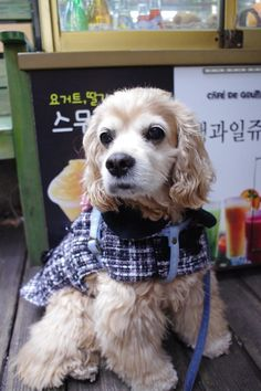 귀엽고 시크한 강아지옷 CoCCoLa 코콜라 www.coccola.co.kr/ 코카옷 중형견옷