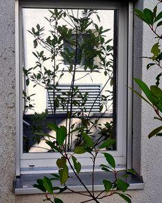 Unsere allseits beliebte #Spiegelfolie B80X1Aussenverlegung ist der ideale Sichtschutz gegen neugierige Blicke fernzuhalten. Weitere Informationen erhalten Sie hier www.folienservice.ch/spiegelfolien Outdoor Structures, Art, Privacy Screens, Art Background, Kunst, Performing Arts