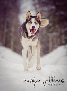 Dog. Snow. Winter