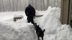 Owner used a snowblower to create an incredible maze for his beloved pets.