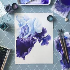 flower iris drawing watercolor