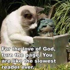 Dumb cat!!!! Hahaha