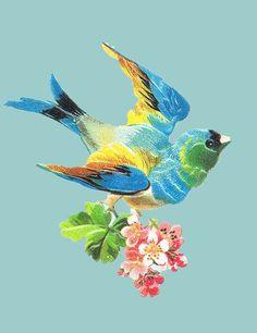Ansichtkaart vogel met blauwe achtergrond