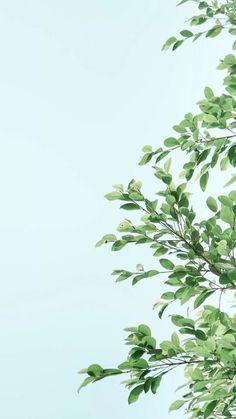 wallpaper, background, and iphone resmi Tumblr Wallpaper, Wallpaper Für Desktop, Plant Wallpaper, Spring Wallpaper, Wallpaper For Your Phone, Colorful Wallpaper, Flower Wallpaper, Screen Wallpaper, Nature Wallpaper