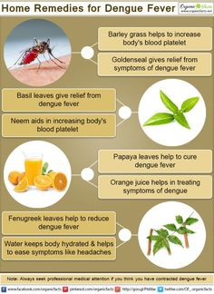 dengue fever herbs *It works !!