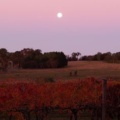 The moon was captured beautifully by @fourwindsvineyard rising above Shiraz vines. This family winery is a pleasant 30-minute drive from Canberra in the picturesque Murrumbateman area, where you can visit wineries, meet cheese and chocolate makers, soak up some history and sample regional produce at local cafes and restaurants. #visitcanberra
