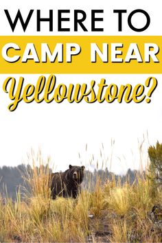 CAMPING NEAR W. YELLOWSTONE: Trying to find a camping spot near and around West Yellowstone can be hard to do! Lucky for you, we have the perfect spot for you, this RV campground is ONLY 20 minutes outside the West Yellowstone entrance, is super affordable and the views are stunning, AND it's family friendly. #yellowstone #rvcamping #campingtips #np #idaho Camping Spots, Rv Camping, Camping Hacks, West Yellowstone, Yellowstone National Park, National Parks, Rv Campgrounds, Best Kept Secret, Idaho