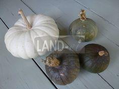 "LAND-ei Kürbisse ""grüne Hokkaido"" und ""Flat White Boer"" Pumpkin, Vegetables, Food, Eggs, Fresh, Pumpkins, Essen, Vegetable Recipes, Meals"