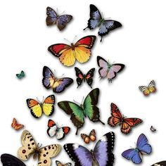 This gorgeous print featuring beautiful vintage butterflies is a sweet reminder to never stop creating the life of your dreams. Their delicate beauty is a positive symbol of transformation, inspiring us to spread our wings and fly, fly, fly. And if we do, who knows the magical places life can take us...