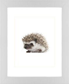 Baby Hedgehog Framed Print, White, Contemporary, Cream, White, Single piece, 8 x 10 inches