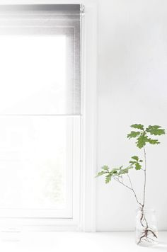 Love the simplicity of the plant, I may try a bunch together.