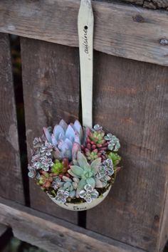 Can I just tell you that this is fantastic?  Succulents in a ladle?  for pouring water?  Brilliant.