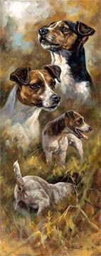 Jack Russell Terrier Prints - English Limited Edition Dog Prints and Dog Art