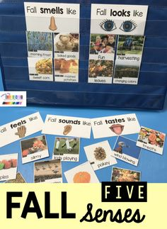 All About Fall – FREEBIE FIVE SENSES All About Fall – students use their senses to describe what fall smells like – sounds like – [. Senses Preschool, Fall Preschool, Kindergarten Classroom, Kindergarten Activities, Five Senses Kindergarten, Kindergarten Freebies, Preschool Science, Fall Smells, Beginning Of The School Year