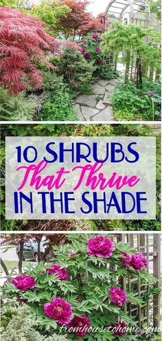 This list of bushes that grow under trees is awesome! I can't wait to try tree peonies, Japanese maples and boxwood in the shade garden in my backyard. shade garden Shade Loving Shrubs: 11 Beautiful Bushes To Plant Under Trees Shade Loving Shrubs, Shade Shrubs, Shade Garden Plants, Garden Shrubs, Shade Perennials, Garden Trees, Garden Bed, Flowers Garden, Shade Trees