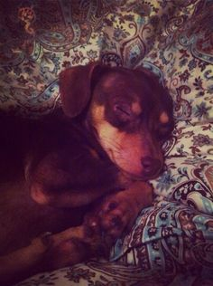 Sleepy face having sweet dreams.