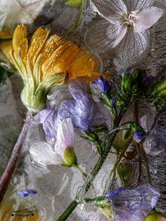 Frozen Flowers Flower Photography, Seed Pods, Dark Shades, Zine, Berries, Seeds, Frozen, Bloom, Invitations