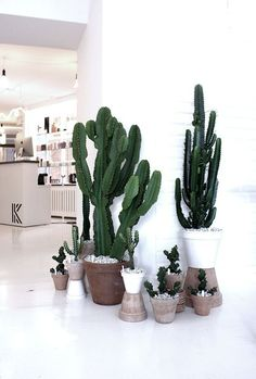 Fill those empty spaces with beautiful succulents and cacti.