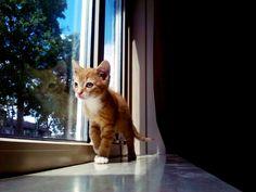 Kitten in de kamer voor het raam in vensterbank, kijkend naar buiten.